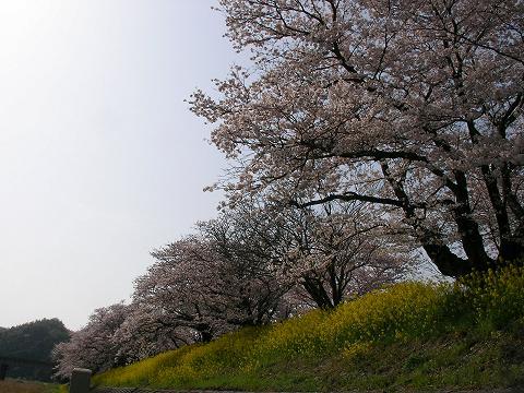 錦帯橋 011