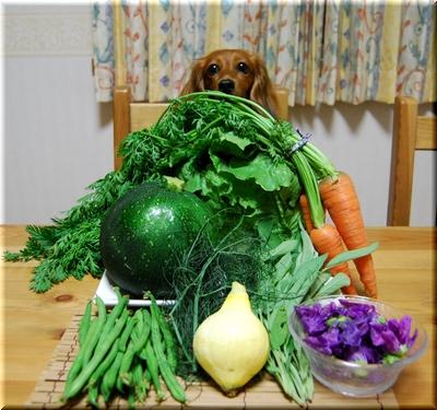 野菜とルッちゃん