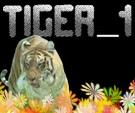 tiger_1.jpg