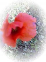 画像+016_convert_20090323092039