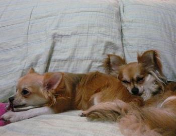 良い枕だねぇ~