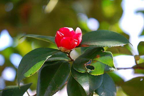 110119 小桜