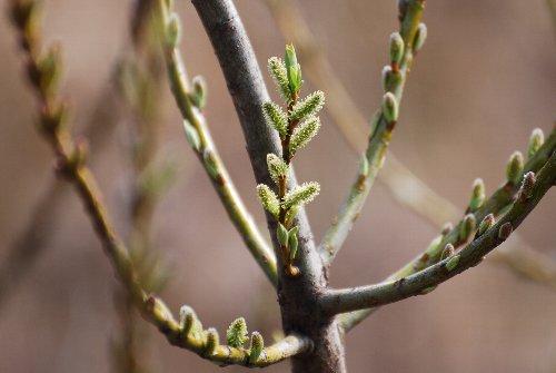 木の芽fだs