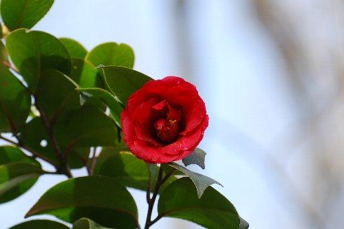 110321 花の里