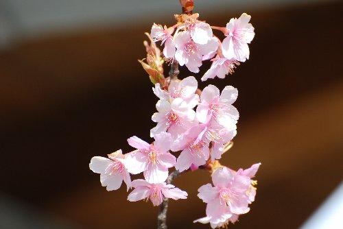 110328 桜