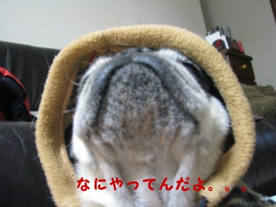 IMG_1371.jpg
