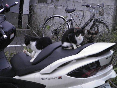 バイクの上
