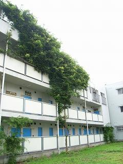 壁面緑化②
