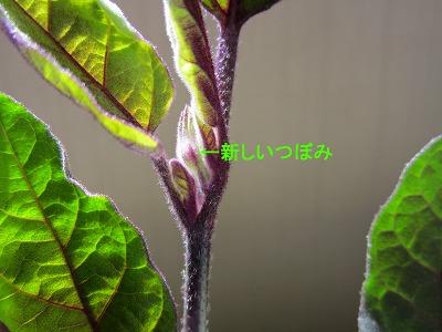 IMG_0041m-nasu.jpg