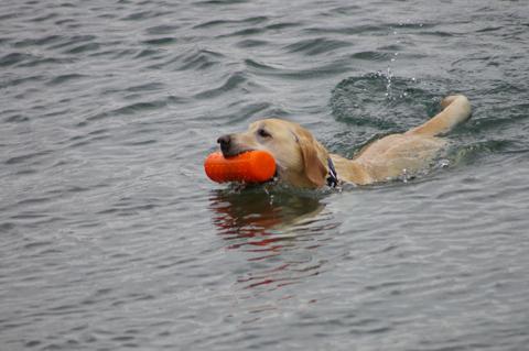 泳ぐバンフ