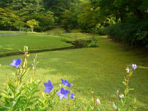 毛越寺  庭園