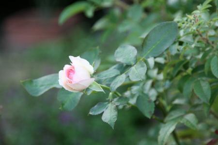 2011-09-22_02.jpg