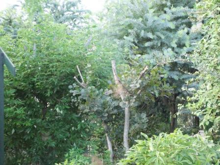 2011-09-23_14.jpg