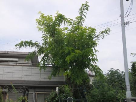 2011-09-25_01.jpg