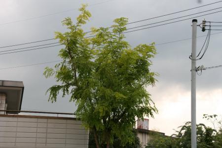2011-09-25_19.jpg
