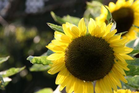 2011-09-26_22.jpg