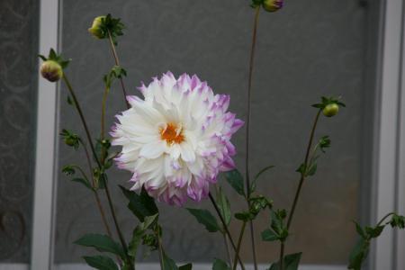 2011-10-26_18.jpg