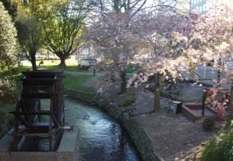 NZで水車と桜のコラボとは!!