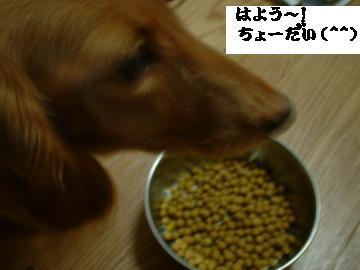 DSCF0013_convert_20081012211524-1.jpg