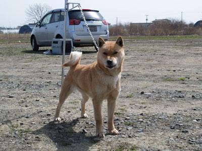 杉山さんちの愛犬