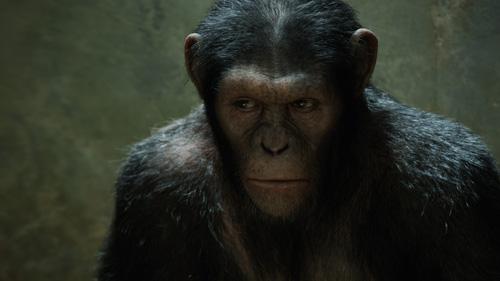 猿の惑星:創世記(ジェネシス)_1