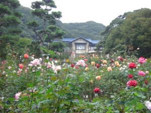 081109 鎌倉バラ