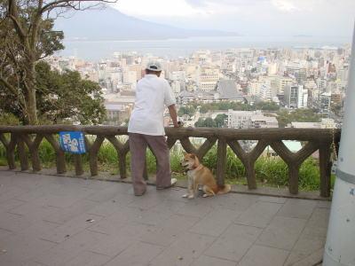 桜島を眺める