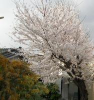2008-04-04x.jpg