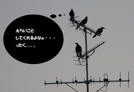 P9200026x.jpg