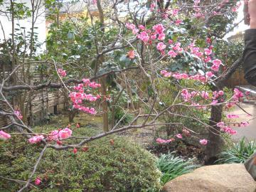 冬の鎌倉6