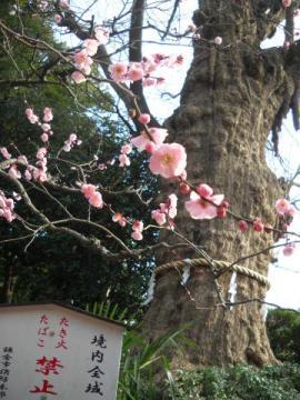 冬の鎌倉2