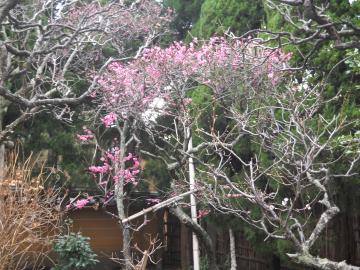 冬の鎌倉11