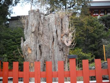 冬の鎌倉18