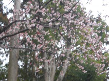 冬の鎌倉19