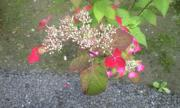 北鎌倉の花2