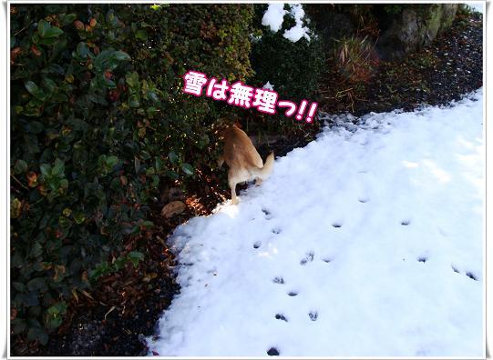 010yukihamuri.jpg