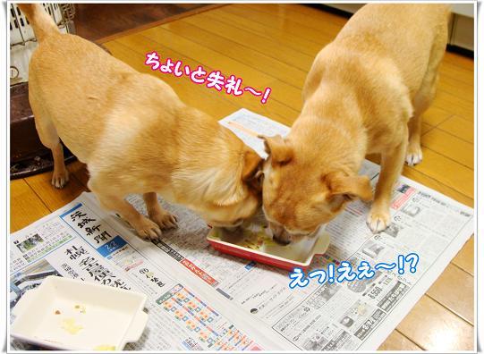 030TYOITOSITUREI.jpg