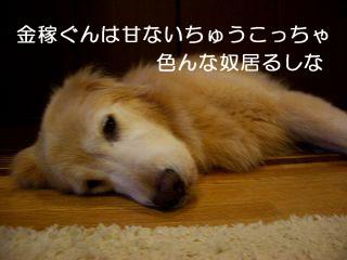 IMGP7146_320.jpg