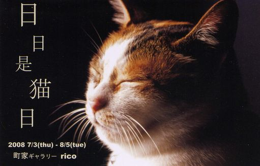 RICO 日々是猫日