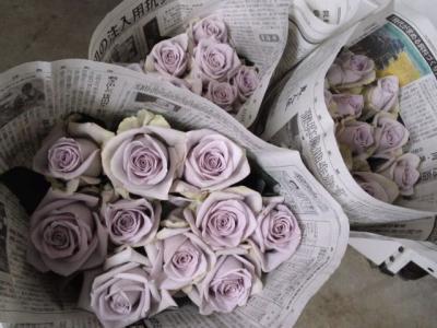 淡い紫のバラ シルバーストーン