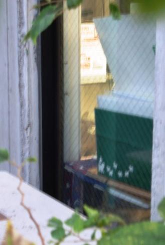 うめさまの窓