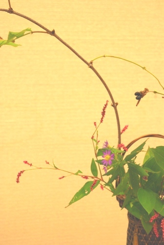 犬蓼と野紺菊