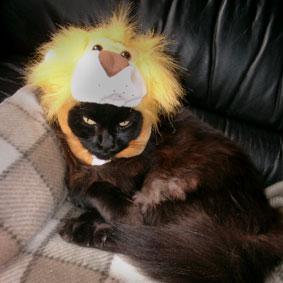 ライオン帽子
