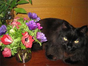 花と黒猫2