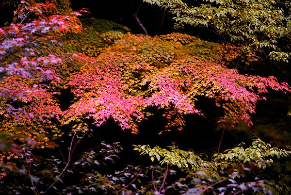 豪渓の紅葉。