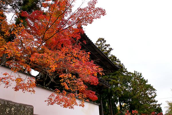 宝福寺081118_001