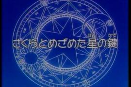 ccsakura48-3.jpg