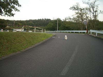 IMGP3446.jpg