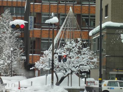 市役所前の雪吊り