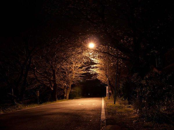 藤枝の夜桜